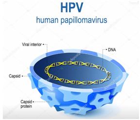 Seção transversal estrutura viral