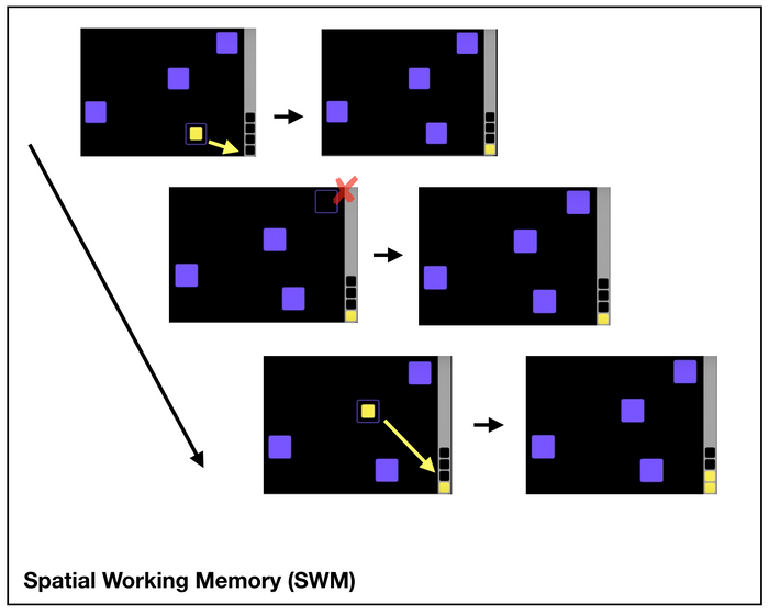 Spatial Working Memory (SWM)