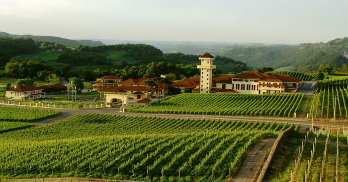 Foto dos vinhedos existentes no vale; por lembrar locais do interior da Itália e estar localizado numa região de inverno rigoroso, o local é muito procurado por casais em lua de mel.