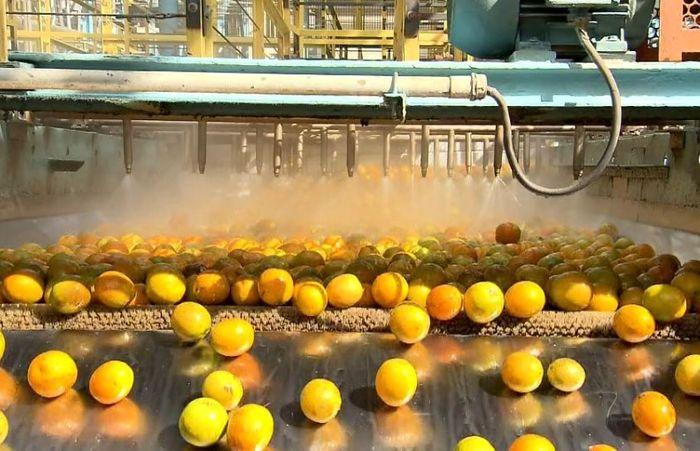 Etapa de lavagem dos frutos