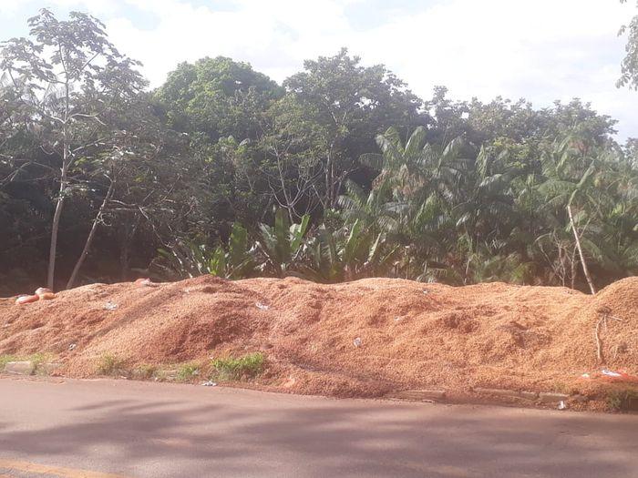 Caroços de açaí jogados à margem de rodovia no município de Axixá-MA