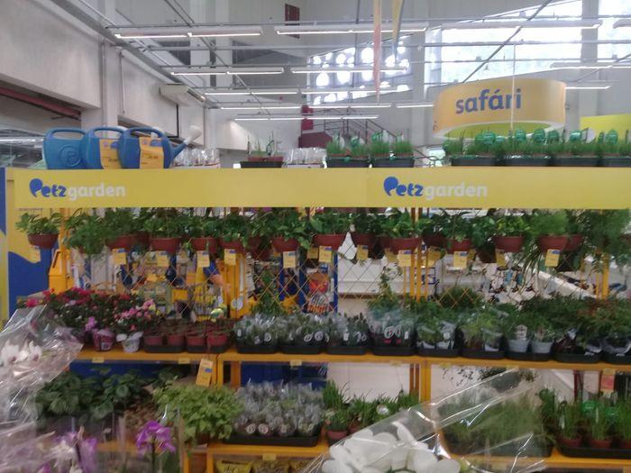 Setor Garden
