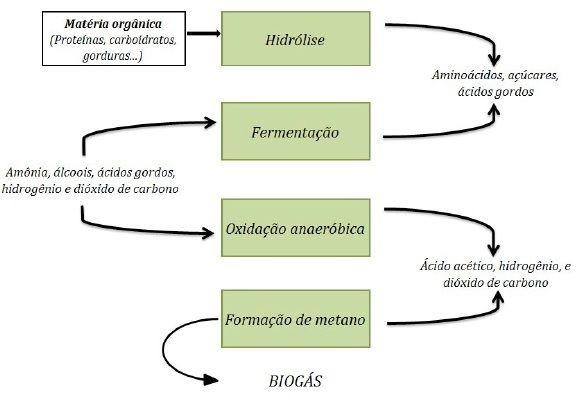 Representação esquemática das etapas da digestão